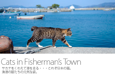 Cats in Fisherman's Town 田代島の猫たち1